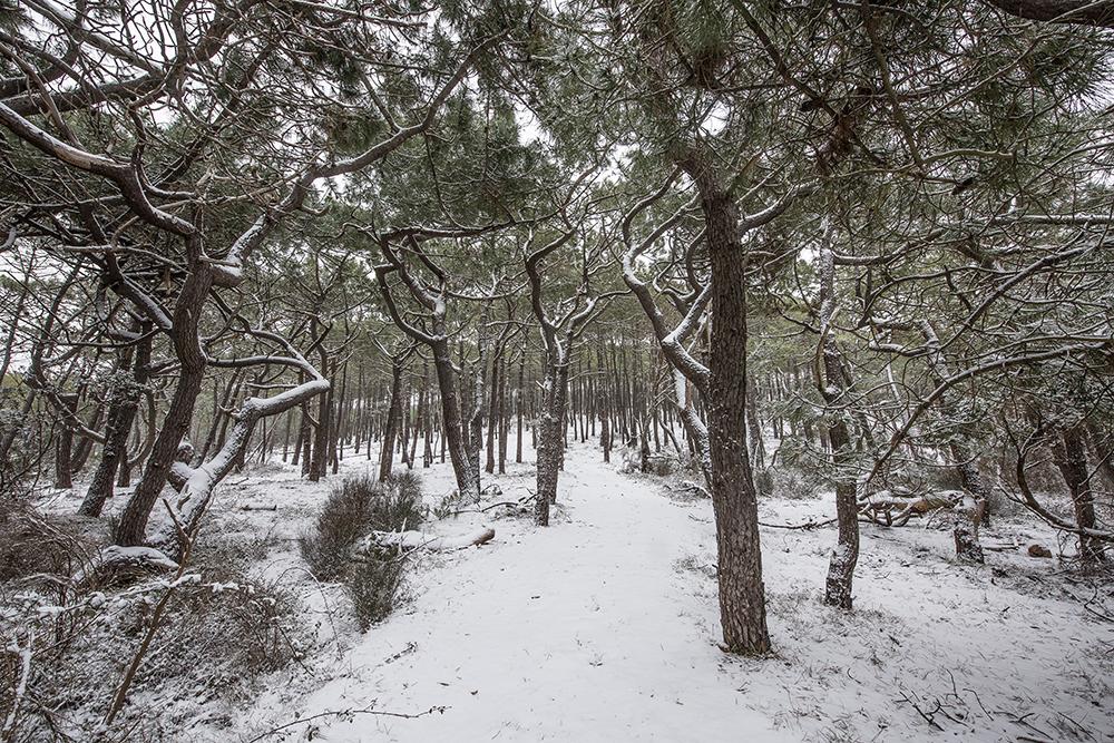 CONTIS - Forêt bord de lette sur la neige